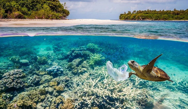 Sea turtles' sad fate: from restaurant menus to plastic 'soup'
