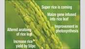Major breakthrough in rice research