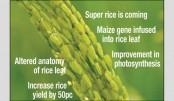Major breakthrough in rice research