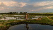 'No Such Thing as Rohingya': Myanmar Erases a History