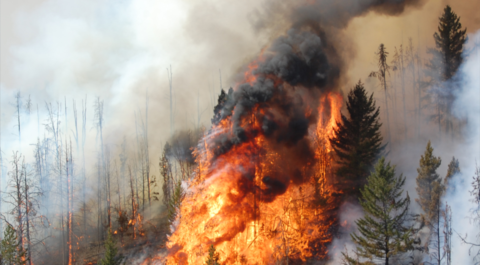 La Nina contributes to wildfire threat in mid-South, Plains