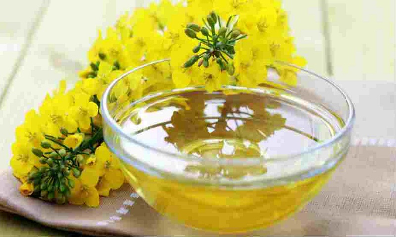 Canola oil may worsen memory, learning ability: study