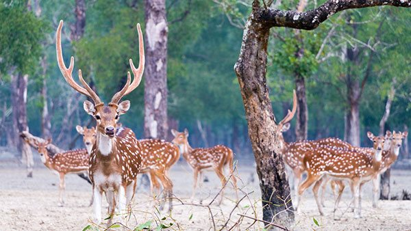 Sundarbans' forest staff to get risk allowance