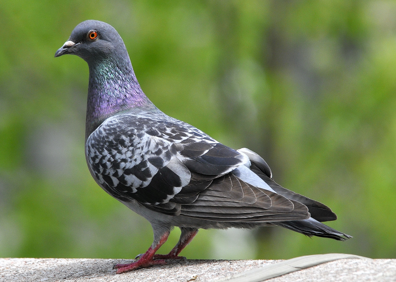 Pigeons capable of abstract decision-making like humans: study