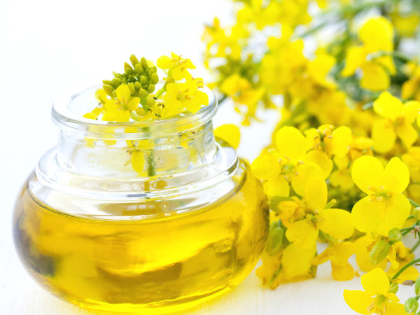 Canola oil may be harmful for the brain: Study