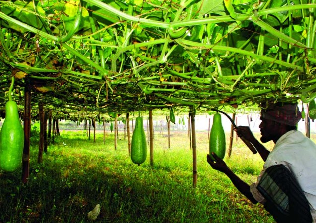 Vegetable farmers earn huge profit in Manikganj