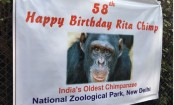 Delhi zoo hosts party for Rita the chimp aged 57