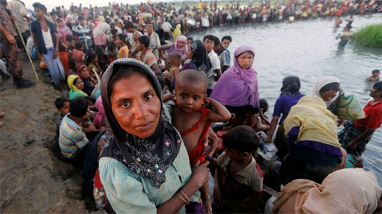 8, 44,227 Rohingyas registered so far