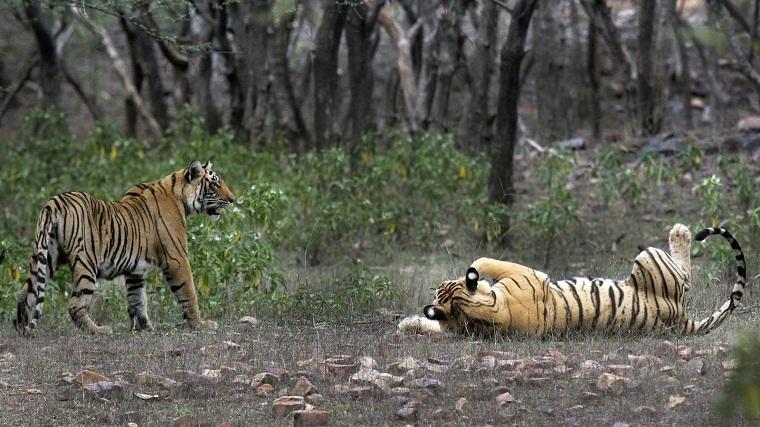 Move underway to conduct Unesco-prescribed survey in Sundarbans