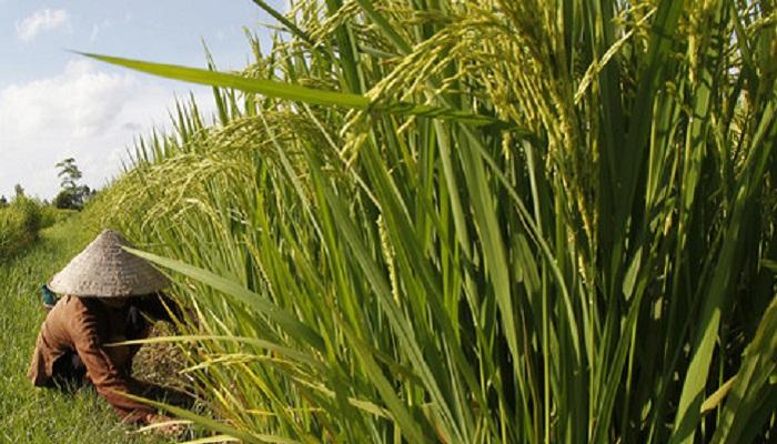 Agriculture flourishing despite challenges