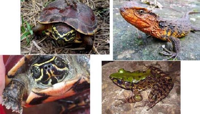 Over 100 new species found Mekong region