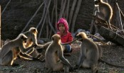 Modern-day Mowgli: Indian toddler forges bond with monkeys