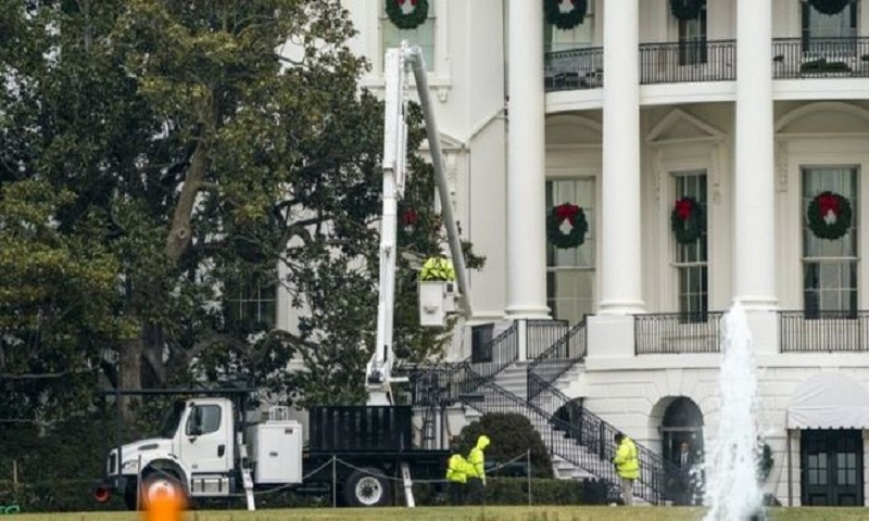 The White House's famous magnolia tree to be cut back