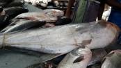 Govt specialized fish market opened at Jatrabari