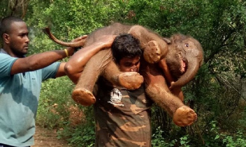 India elephant rescue: The forest guard who saved a calf