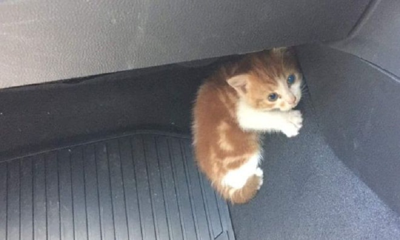 Kitten rescued by police from busy Auckland motorway