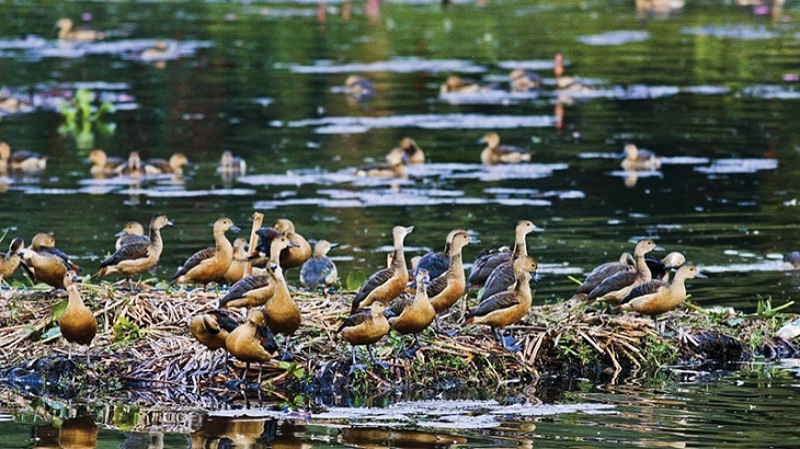 Migratory birds arriving to northern water bodies