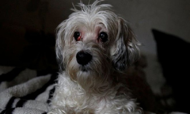 Dog 'lay beside dead owner for weeks' in Hungary flat