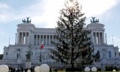 New life for Rome's 'baldy' Christmas tree Spelacchio