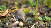 Elegant water shrew spotted for first time in Indian Uttarakhand