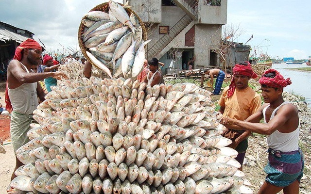 Government to lift ban on hilsa export: Minister
