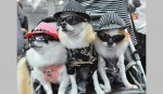 Pet Fashion: Because They Deserve Better