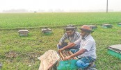 32,340-kg honey collected in Jamalpur