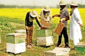 Honey harvesting gains popularity in Rajshahi