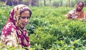 The Role  Of Women  In Rural  Agriculture