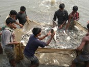 Fish production gets a boost in Rajshahi