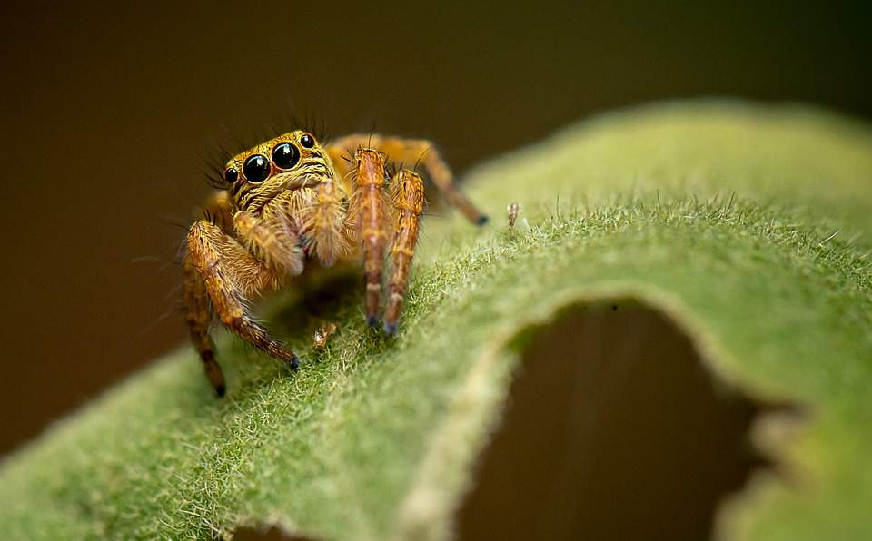 New spider species named after literary characters, including Harry Potter, GOT