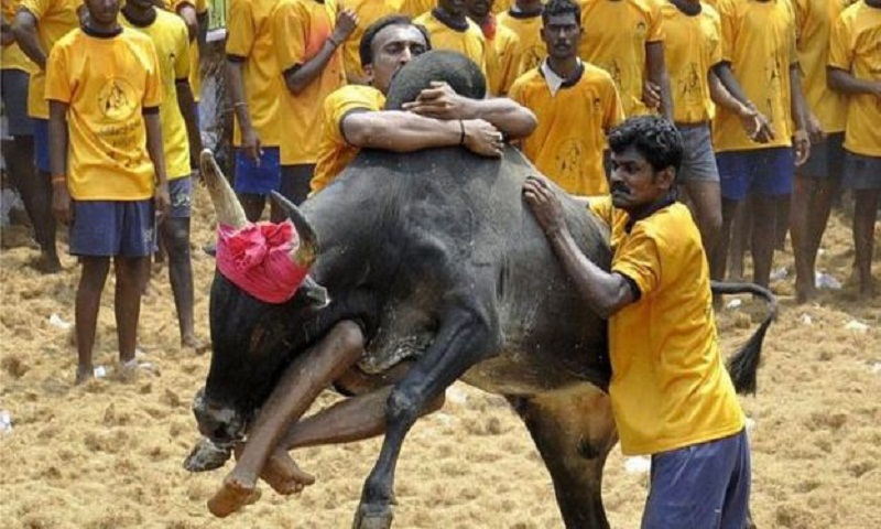 Jallikattu: Three gored to death India bull-taming sport