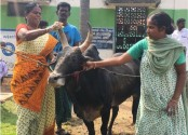 The Indian woman who chose a bull over marriage!