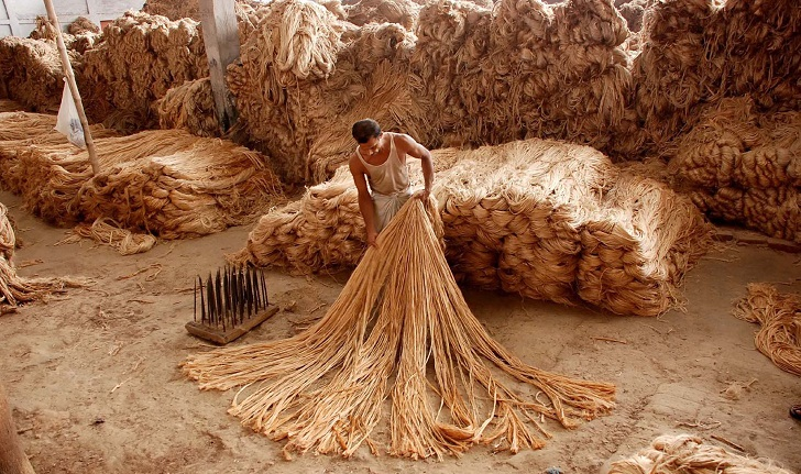 Government bans export of three categories of raw jute