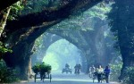 HC halts plan to fell trees on Jessore-Benapole Road for six months