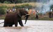 Rohingya man killed in Cox's Bazar elephant attack