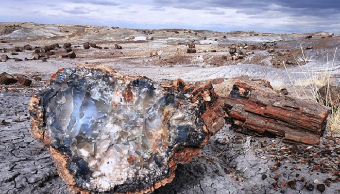 280-million-year-old fossil forest discovered in Antarctica