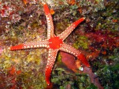 Barrier Reef funding boost to tackle predatory starfish