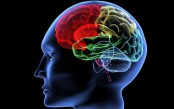 Structural differences in brain linked to epilepsy: Study