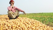 Scope for Potato Processing Industry in Bangladesh