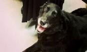 Beloved dog missing for 10 years finds her way back home