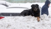 Heaviest snowfall on record blankets Moscow