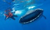 Plastic pollution: Scientists' plea on threat to ocean giants
