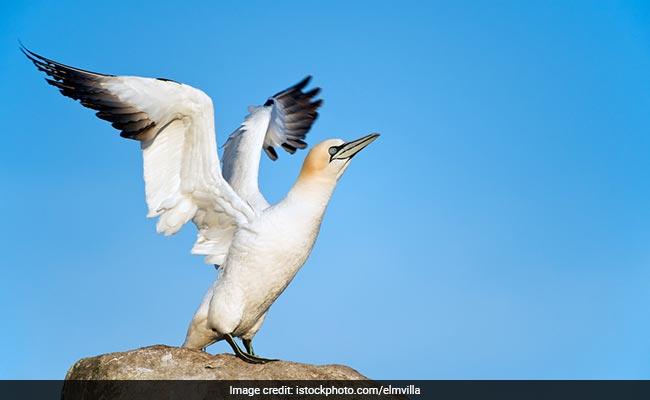 World's loneliest bird Nigel dies in New Zealand