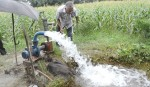Higher irrigation cost  worries Boro farmers