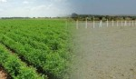 'Enact law to save agricultural land'