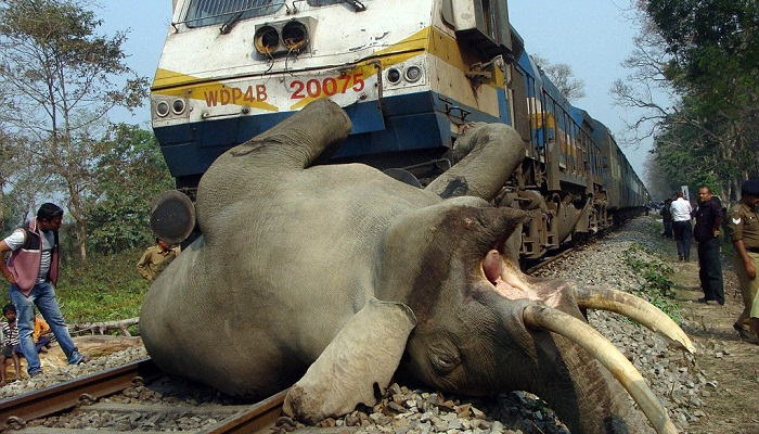 Four elephants killed in train collision in Assam