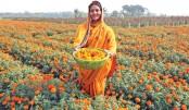 Flower farming gets popular in Rajshahi