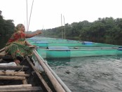 Fish farming in cages brings boon for many Narsingdi youths