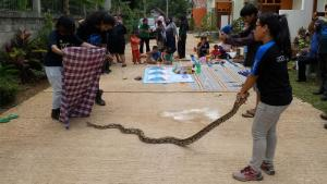 Jakarta's battle with snakes